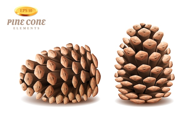 Conos de pino 3d aislados o estróbilo perenne realista. órgano de plantas de invierno de coníferas para semillas.