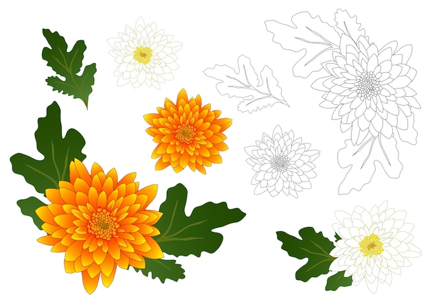 Contorno de crisantemo amarillo y blanco
