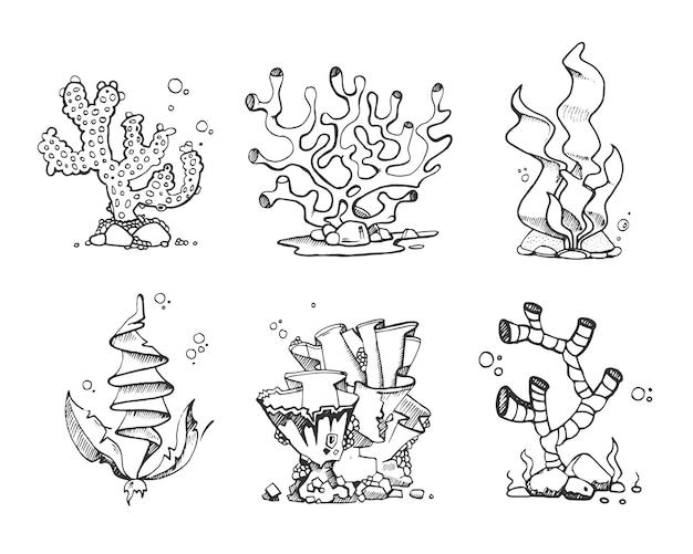 Corales y algas vintage en dibujado a mano.