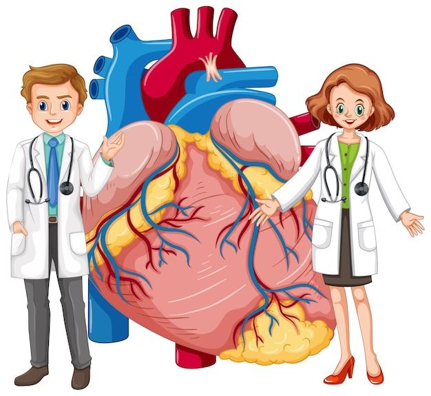 Corazón humano con personaje de dibujos animados de dos médicos