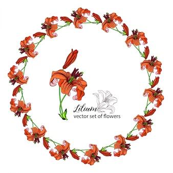 Coronas florales de los capullos de lirio. lirio naranja