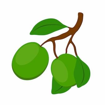 Cosmética de karité planta orgánica, nuez.