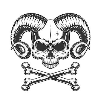 Cráneo del diablo sin mandíbula