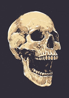 Cráneo dibujado a mano