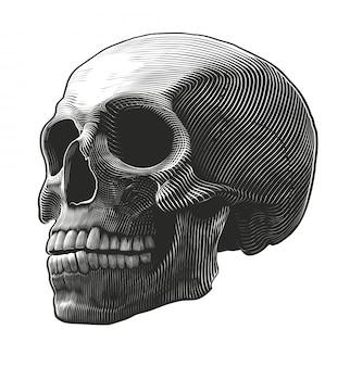 Cráneo humano en estilo grabado.