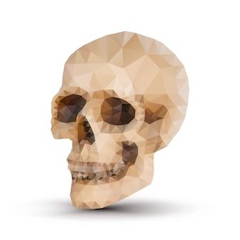 Cráneo humano de triángulo con sombra