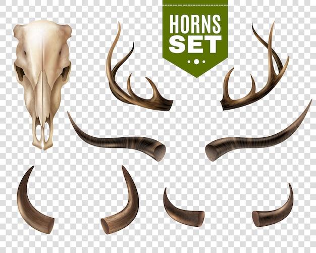Cráneo de vaca y cuernos conjunto