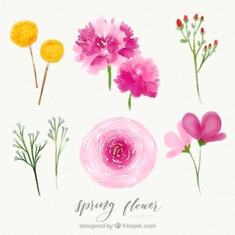 Creativo conjunto de flores de primavera de acuarela