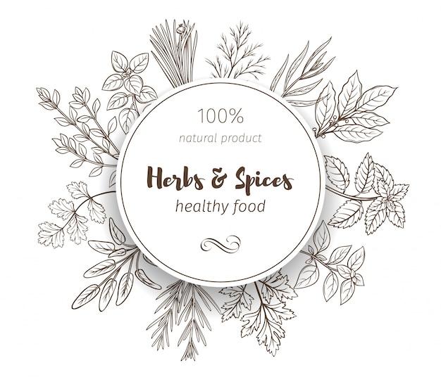 Croquis dibujados a mano hierbas y especias