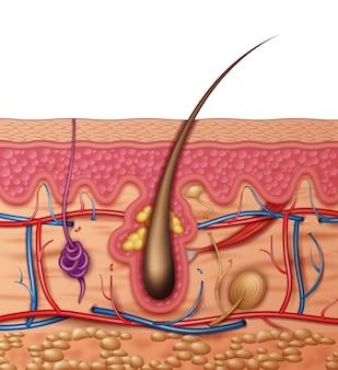 Cruz de anatomía de la piel humana vista lateral de cerca