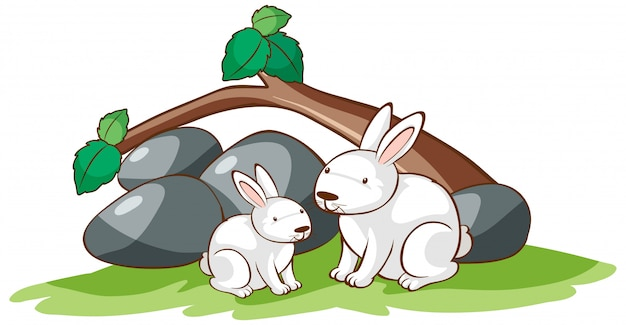 Cuadro aislado de dos conejos en el jardín.