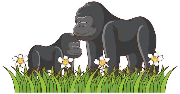 Cuadro aislado de gorilas en el parque