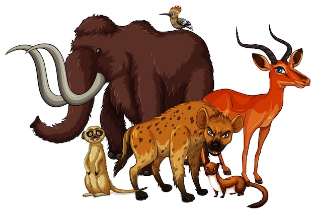 Cuadro aislado de muchos animales