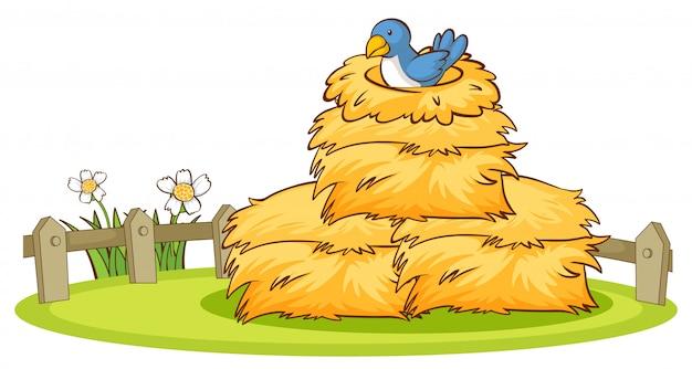 Cuadro aislado de pájaro en el nido