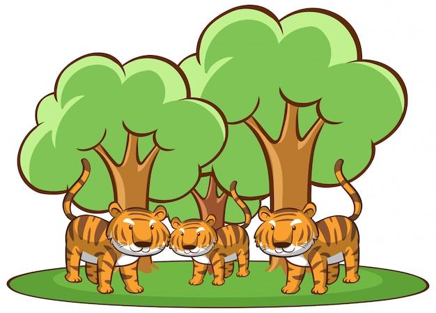 Cuadro aislado de tigres en bosque