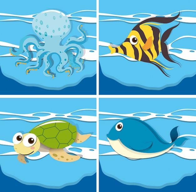 Cuatro animales marinos diferentes.