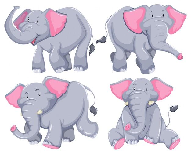 Cuatro elefantes en diferentes poses