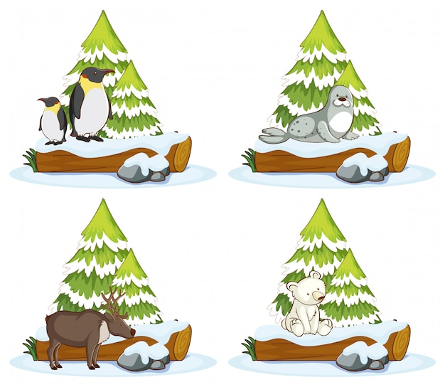 Cuatro escenas con diferentes animales.