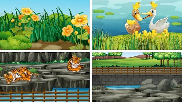 Cuatro escenas diferentes de la naturaleza.