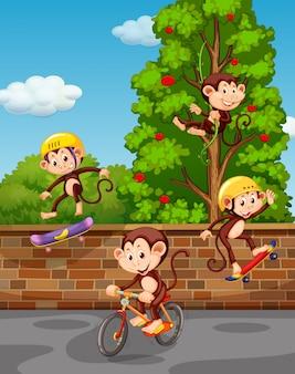 Cuatro monos jugando en la calle.