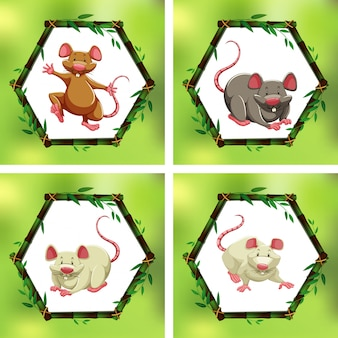 Cuatro ratas diferentes en marcos de bambú.