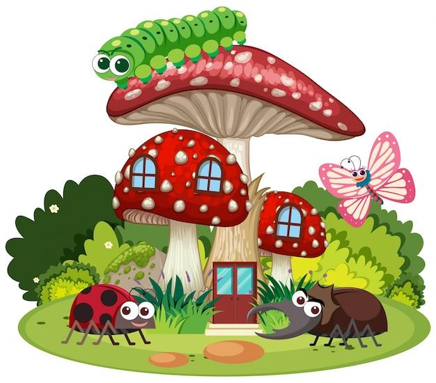 Cuatro tipos de insectos en la casa de setas