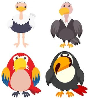 Cuatro tipos de pájaros en el fondo blanco