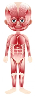 Cuerpo con superposición muscular
