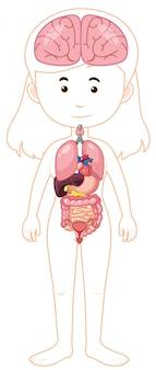 Un cuerpo de mujer y órganos