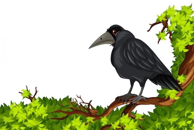 Cuervo de pie en la rama