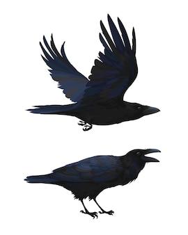 Cuervo realista volando y sentado. graznar. ilustración colorida del pájaro inteligente corvus corax