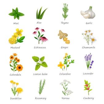 Curación de hierbas y plantas medicinales iconos planos.