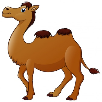 Cute una caricatura de camellos