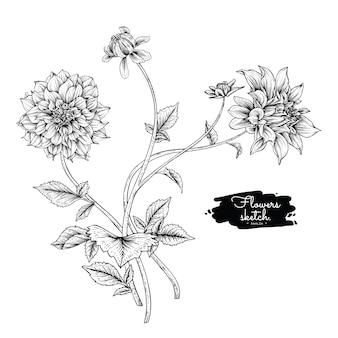 Dahlia hoja y dibujos de flores.