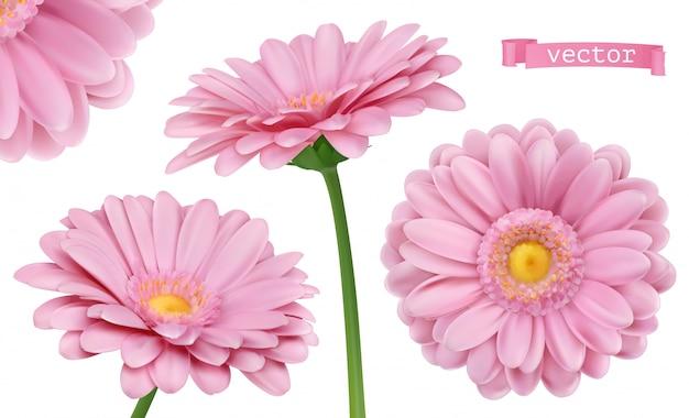 Dalia rosa conjunto de flores de manzanilla 3d