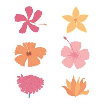Decoración de flores florecer iconos florales naturaleza