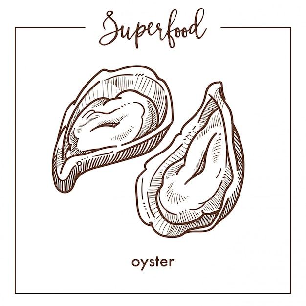 Deliciosa ostra natural en cáscara monocromo superfood bosquejo sepia