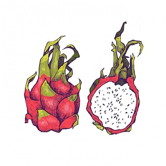 Deliciosas frutas exóticas dibujadas a mano