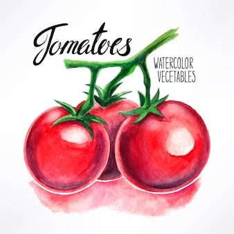 Deliciosos tomates maduros de acuarela