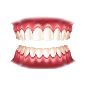 Dentaduras postizas realistas para el diseño de odontología y ortodoncia