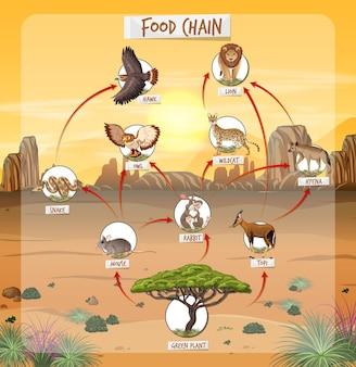 Diagrama de la cadena alimentaria en el bosque.