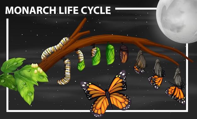 Diagrama del ciclo de vida de la monarca