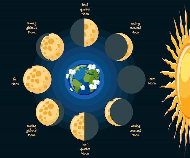 Diagrama de fases de la luna básica | Vector Premium