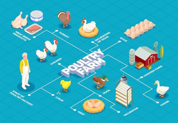 Diagrama de flujo de granja avícola con granja de pollos pavo ganso aves huevos productos cárnicos elementos isométricos