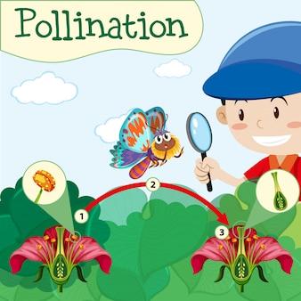 Diagrama de polinización con niño y flor