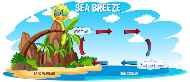 Diagrama que muestra la circulación de la brisa marina.