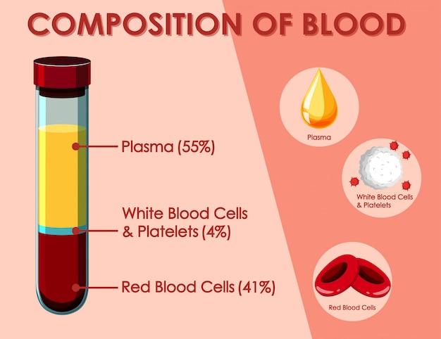 Diagrama que muestra la composición de la sangre.