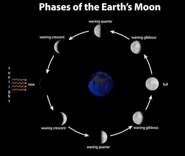 Diagrama que muestra las fases de la luna terrestre.