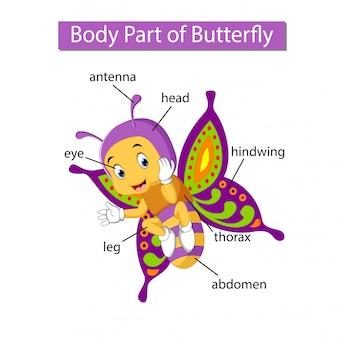 Diagrama que muestra parte del cuerpo de la mariposa