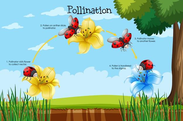 Diagrama que muestra la polinización con flor y error